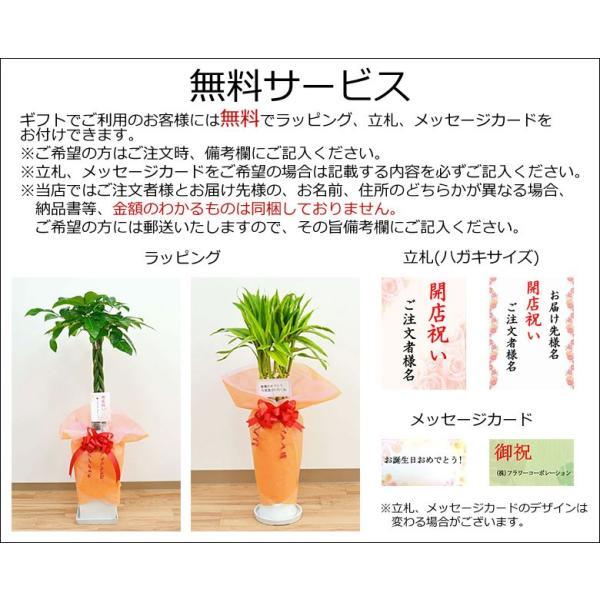 観葉植物ミニ ハイドロカルチャー 3鉢セット おしゃれ お祝い 陶器鉢付き|flower-c|09