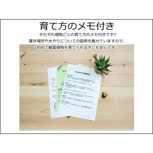 観葉植物ミニ ハイドロカルチャー 3鉢セット おしゃれ お祝い 陶器鉢付き|flower-c|10
