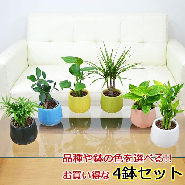 観葉植物ミニ ハイドロカルチャー陶器鉢付き 4鉢セット おしゃれ お祝い