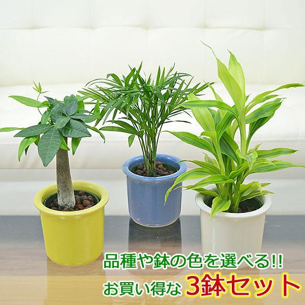 観葉植物ミニ ハイドロカルチャー 3鉢セット おしゃれ お祝い パステルカラー陶器鉢付き