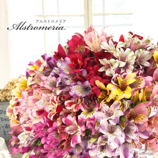 予約販売4月以降発送 選べるアルストロメリア苗Part1 宿根草 10.5cmポット|flower-net|03
