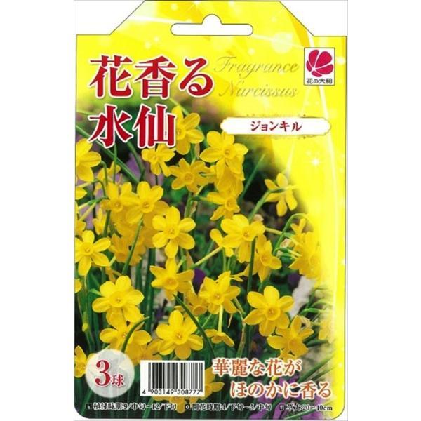 花の大和 球根 きゅうこん 水仙 花香る水仙 ジョンキル 2球