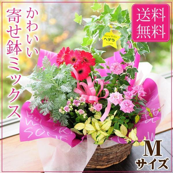 誕生日の花 鉢植え 花 ギフト 可愛い寄せ鉢ミックス Mサイズ お祝い 花 おしゃれ寄せ植えギフト 翌日配達 flower