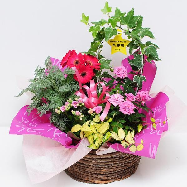 誕生日の花 鉢植え 花 ギフト 可愛い寄せ鉢ミックス Mサイズ お祝い 花 おしゃれ寄せ植えギフト 翌日配達 flower 02