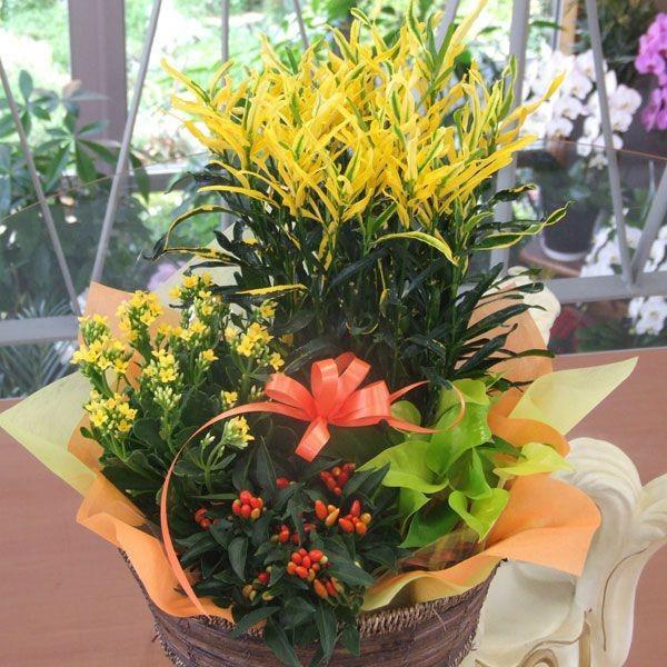 誕生日の花 鉢植え 花 ギフト 可愛い寄せ鉢ミックス Mサイズ お祝い 花 おしゃれ寄せ植えギフト 翌日配達 flower 04