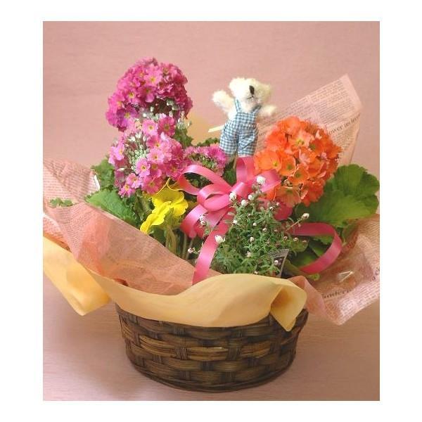 誕生日の花 鉢植え 花 ギフト 可愛い寄せ鉢ミックス Mサイズ お祝い 花 おしゃれ寄せ植えギフト 翌日配達 flower 05