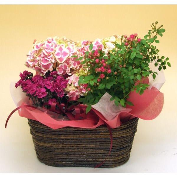 誕生日の花 鉢植え 花 ギフト 可愛い寄せ鉢ミックス Mサイズ お祝い 花 おしゃれ寄せ植えギフト 翌日配達 flower 06