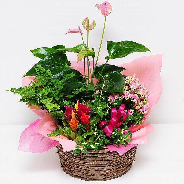 誕生日の花 鉢植え 花 ギフト おまかせ寄せ鉢ミックス Lサイズ お祝い 花 おしゃれ 寄せ植えギフト 翌日配達|flower|02