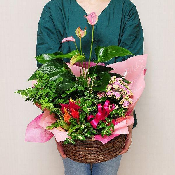 誕生日の花 鉢植え 花 ギフト おまかせ寄せ鉢ミックス Lサイズ お祝い 花 おしゃれ 寄せ植えギフト 翌日配達|flower|03