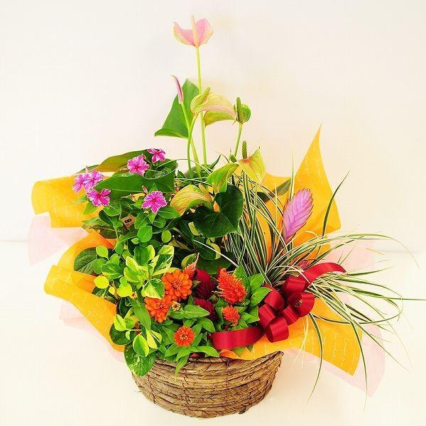 誕生日の花 鉢植え 花 ギフト おまかせ寄せ鉢ミックス 2Lサイズ お祝い 花 おしゃれ ギフト 翌日配達|flower|02