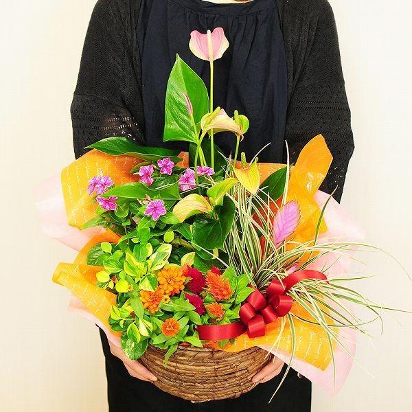 誕生日の花 鉢植え 花 ギフト おまかせ寄せ鉢ミックス 2Lサイズ お祝い 花 おしゃれ ギフト 翌日配達|flower|03