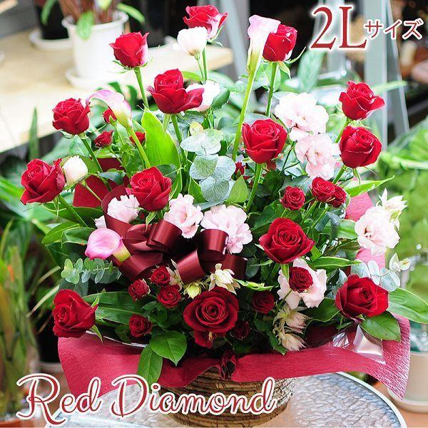 誕生日ギフト 赤いバラ  生花 アレンジメント レッドダイヤモンド 2Lサイズ バラプレゼント|flower