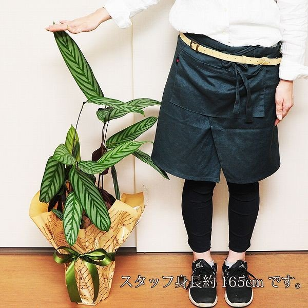 カラテア コンパクトスター 6号鉢 観葉植物 鉢  フラワーギフト|flower|04
