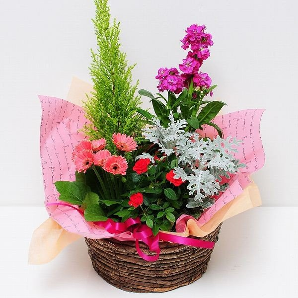 鉢植え 花 ギフト おまかせ寄せ鉢ミックス Mサイズ ギフト 翌日配送|flower|02