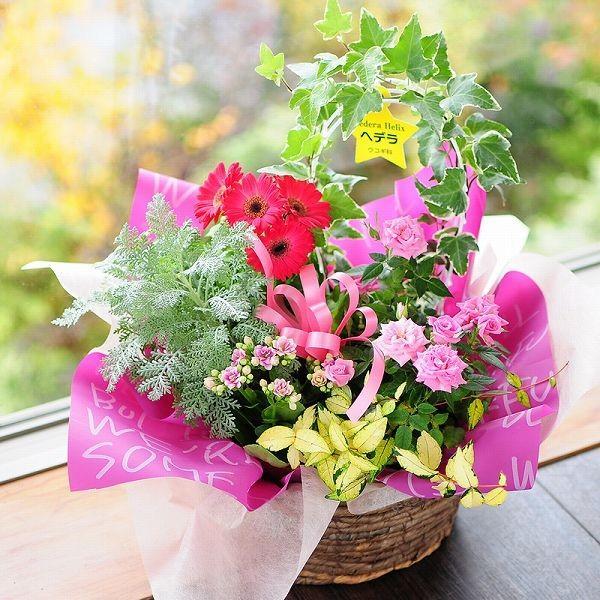 鉢植え 花 ギフト おまかせ寄せ鉢ミックス Mサイズ ギフト 翌日配送|flower|04