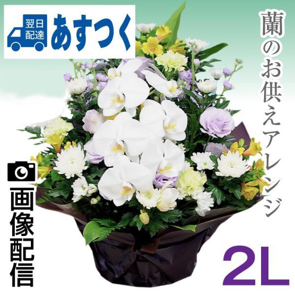 花 お供え 花 喪中 蘭のお供え仏花 アレンジメント 2Lサイズ 命日一周忌法事法要宅配 喪中はがき 届いたら|flower