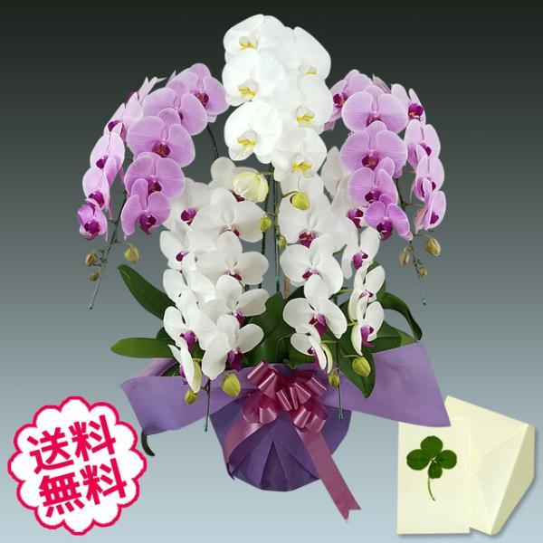 胡蝶蘭 大輪 ミックス(白+ピンク+リップ)5本立45輪前後/ 開店・開業・開院・竣工・就任・昇進・新築・移転・引越・退職・当選のお祝い。 flowergift-meme