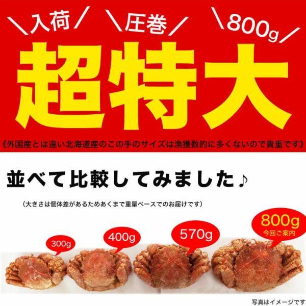 毛ガニ かに カニ 毛がに ジャンボ 約800〜1kg 1尾 お歳暮 冷凍|foodsland|03