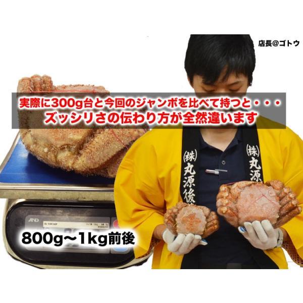 毛ガニ かに カニ 毛がに ジャンボ 約800〜1kg 1尾 冷凍 夏カニ|foodsland|04