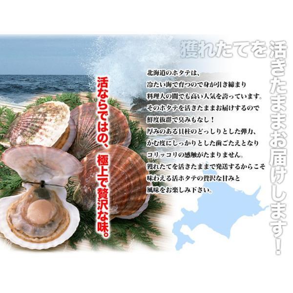 ホタテ ほたて 大 3kg 活 貝付き 殻付き 冷蔵 :3782:フーズランド ...