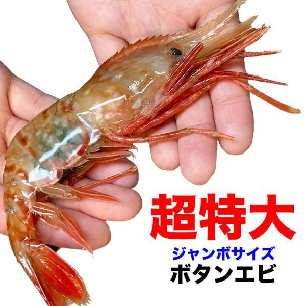 ボタンエビ 刺身 海老 えび エビ 蝦  生 ぼたんえび1kg 冷凍 foodsland