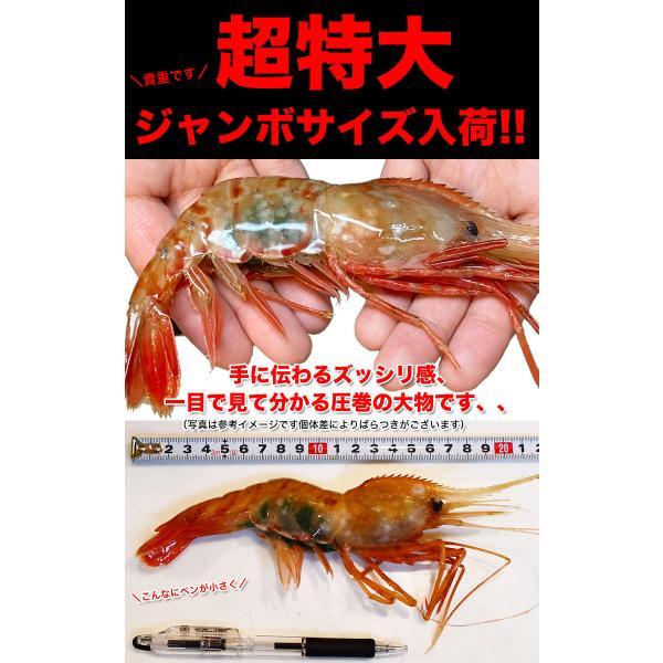 ボタンエビ 刺身 海老 えび エビ 蝦  生 ぼたんえび1kg 冷凍 foodsland 03