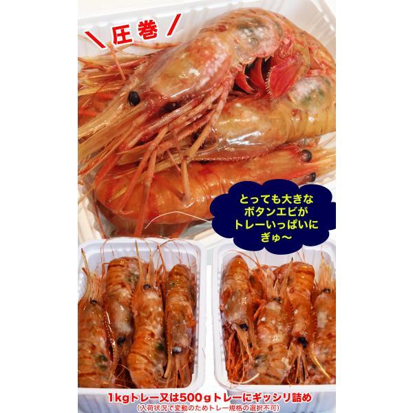 ボタンエビ 刺身 海老 えび エビ 蝦  生 ぼたんえび1kg 冷凍 foodsland 06