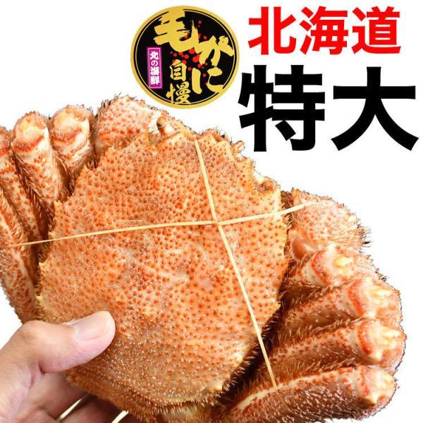 北海道/オホーツク最高級堅ランク品特大毛ガニ1尾 約570g前後 ボイル加熱済 冷凍|foodsland