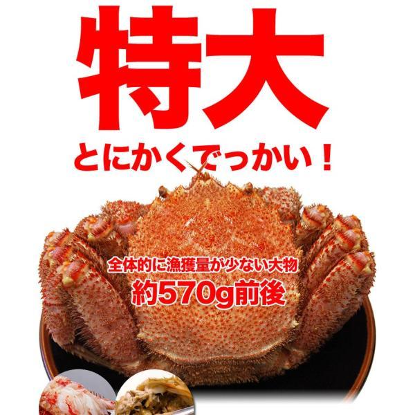 北海道/オホーツク最高級堅ランク品特大毛ガニ1尾 約570g前後 ボイル加熱済 冷凍|foodsland|02