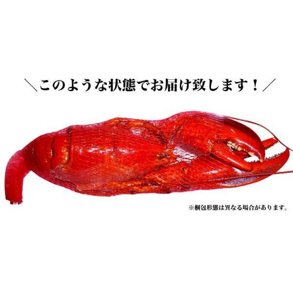 えび 海老 蝦 ボイルオマールロブスター オマールエビ Lサイズ約400g前後4尾 高級食材|foodsland|04