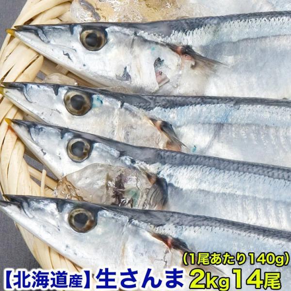生サンマ 2kg前後 14尾前後 140g前後 大サイズ 北海道産 秋刀魚 さんま 10月上〜中旬前後より収獲次第順次出荷 お届け日指定不可 キャンセル不可 受取不在注意