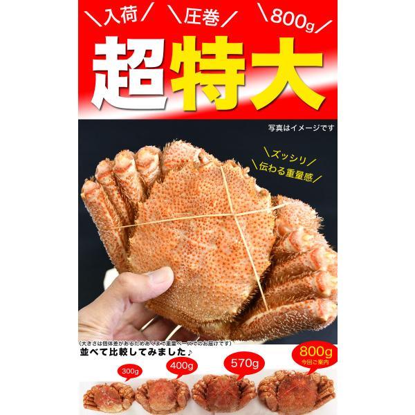 超特大BIG800g2尾 毛ガニ 一級品堅の毛がに けがにカニ味噌 蟹のかにみそ ボイル加熱済み急速冷凍|foodsland|05
