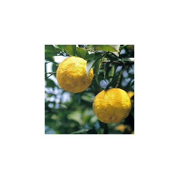 オットギ 三和 蜂蜜ゆず茶1kg 9本セット 1ケース お徳用 柚子茶 韓国お茶 健康茶 ハチミツ柚子茶|foodsup|03
