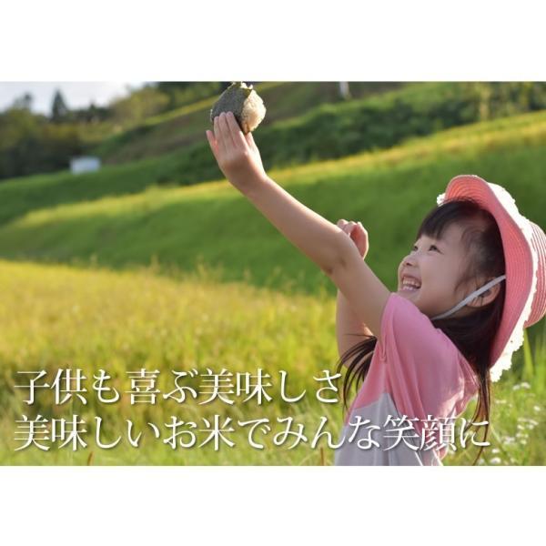 森のくまさん 米 送料無料 5kg 30年度産新米 熊本県産 白米 お米 こめ 新米 ひのひかり こしひかり|foodys|08