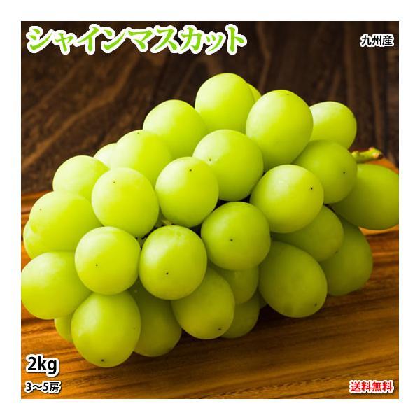 シャインマスカット ぶどう 送料無料 2kg 3〜5房 福岡・熊本県産 お取り寄せ マスカット 葡萄 ブドウ