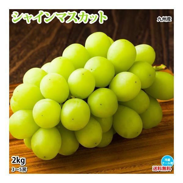 シャインマスカット ぶどう 送料無料 2kg 3〜5房 〈クール便でお届け〉 福岡・熊本県産 お取り寄せ マスカット 葡萄 ブドウ