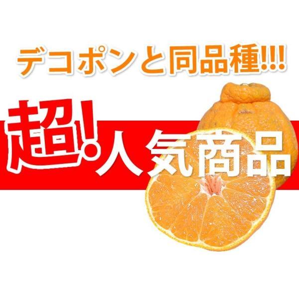 デコポン 同品種 訳ありデコみかん 1.5kg S〜2L 送料無料 2セットで1セットおまけ 3セットで3セットおまけ 熊本県産 ポンカン みかん ミカン 蜜柑|foodys|02