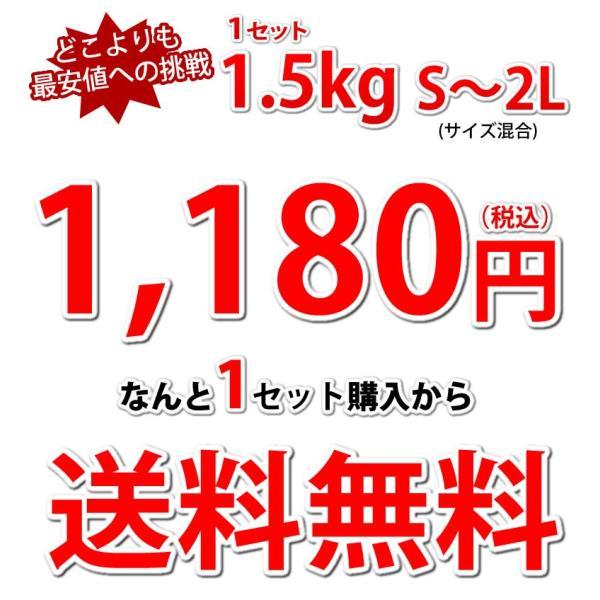 デコポン 同品種 訳ありデコみかん 1.5kg S〜2L 送料無料 2セットで1セットおまけ 3セットで3セットおまけ 熊本県産 ポンカン みかん ミカン 蜜柑|foodys|05