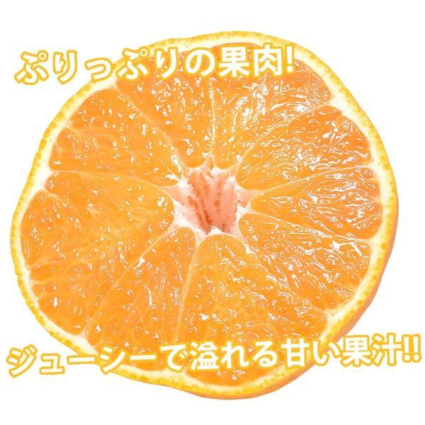 デコポン 同品種 訳ありデコみかん 1.2kg S〜2L 送料無料 2セットで1セットおまけ 3セットで3セットおまけ 熊本県産 ポンカン みかん ミカン 蜜柑 foodys 11