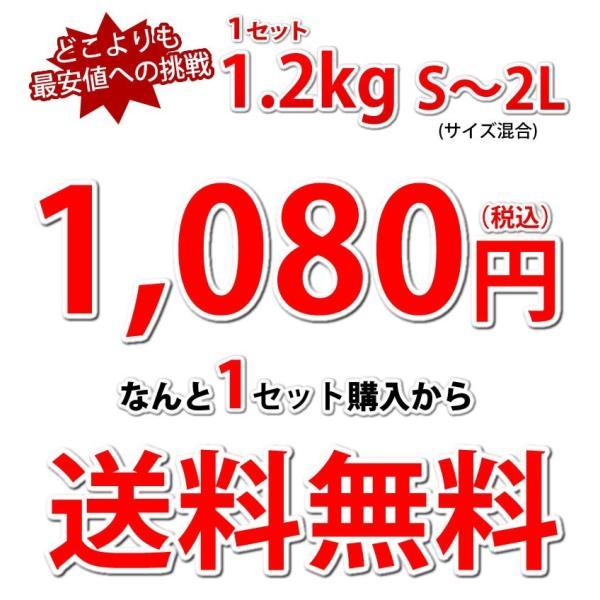 デコポン 同品種 訳ありデコみかん 1.2kg S〜2L 送料無料 2セットで1セットおまけ 3セットで3セットおまけ 熊本県産 ポンカン みかん ミカン 蜜柑 foodys 05