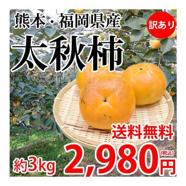 太秋柿 柿 訳あり 送料無料 約3kg 熊本県産 フルーツ お取り寄せ たいしゅうがき 太秋 甘柿 かき カキ