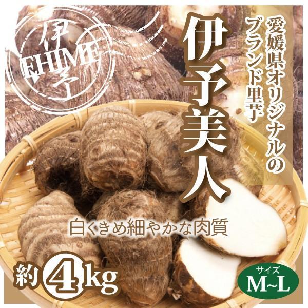 さといも 里芋 伊予美人 愛媛産 送料無料 約4kg M〜Lサイズ|footmark