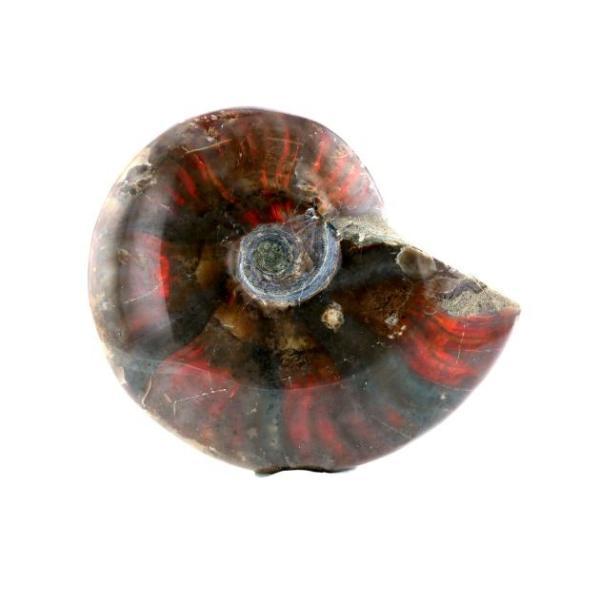 アンモライト (アンモナイト) 化石 原石  No.7 パワーストーン 天然石