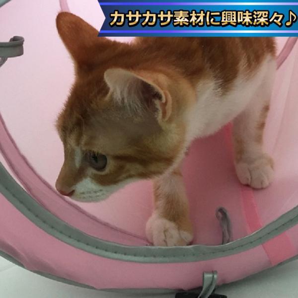 猫 おもちゃ トンネル ボール カシャカシャ 猫のおもちゃ スパイラル 猫じゃらし ペット用品 犬 ねこ キャットトイ four-piece 10