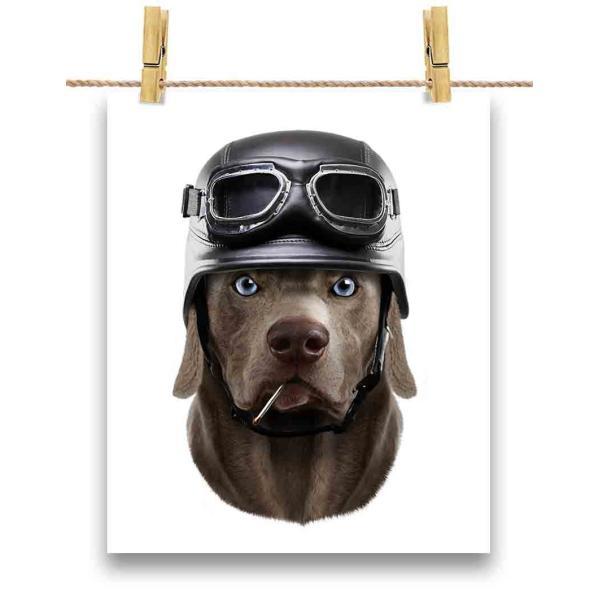 【ワイマラナー ドッグ 犬 いぬ ヘルメット】ポストカード by Fox Republic