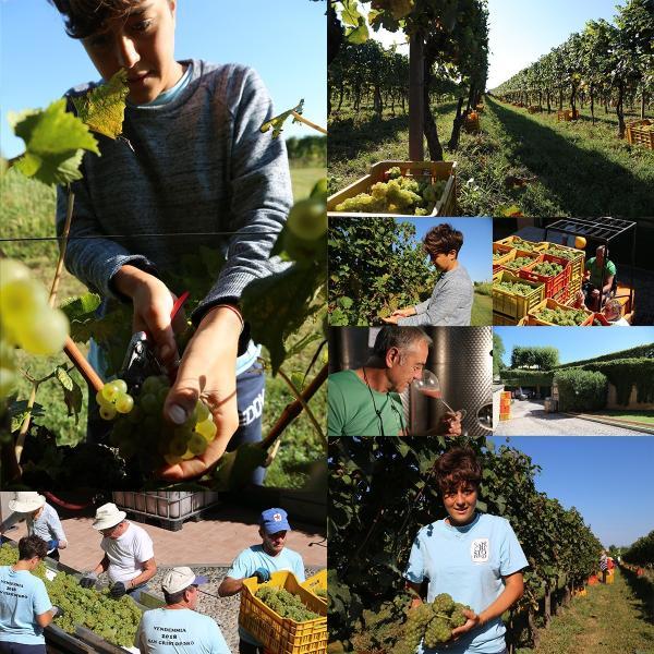 イタリア最高級スパークリングワイン フランチャコルタ ブリュット マグナム / サンクリストーフォロ 1500ml 辛口 自然派ワイン 限定本数入荷の希少品 franciacorta 09