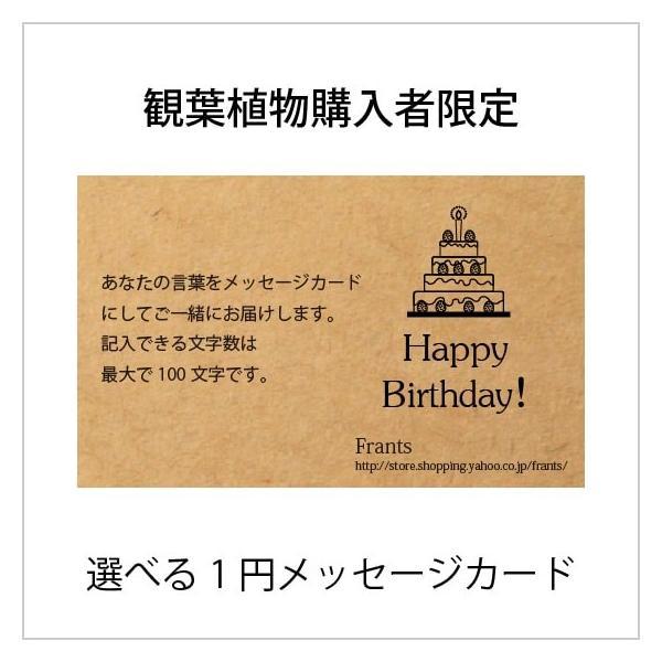 (観葉植物購入者様限定) メッセージカード / 立札|frants