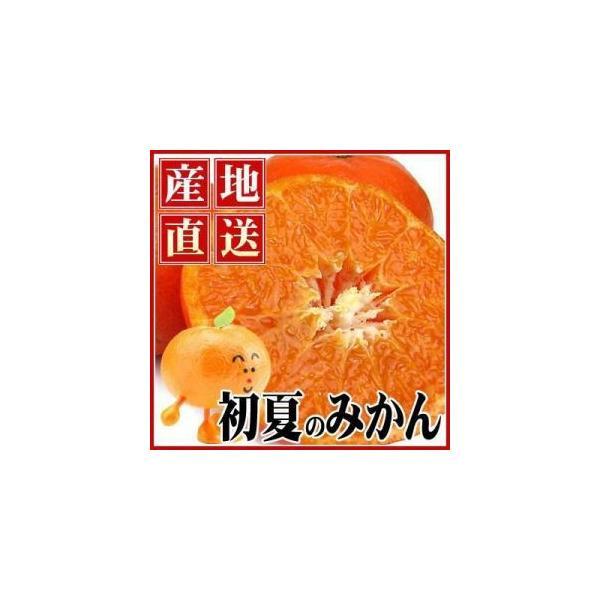 愛媛産カラ・マンダリン2kg【送料無料】【訳あり】|fruit-sunny