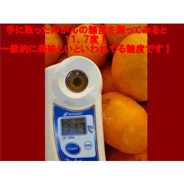 【暴走企画!最安値に挑戦!】みかん 訳あり 熊本産 1箱 箱込10キロ(9kg+保証分500g)フルーツ グルメ|fruitkanmiya-ggy|04