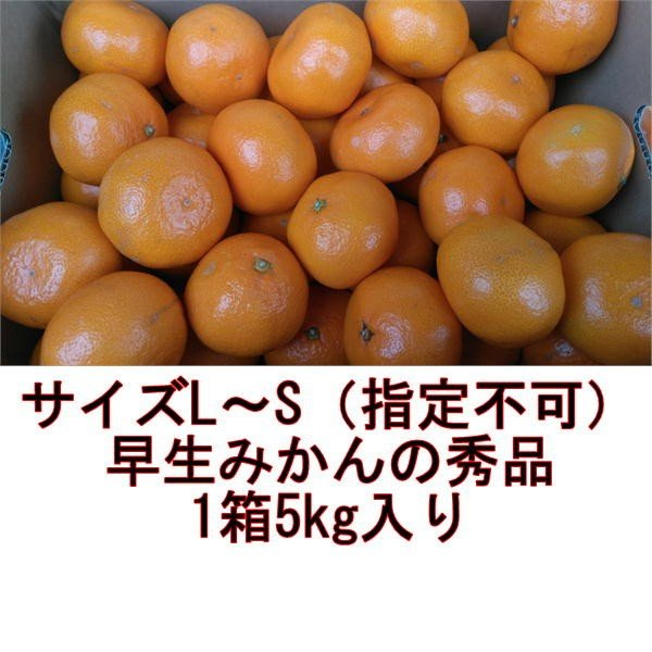 早生みかん 秀品 1箱5kg サイズL・M・S 熊本産 フルーツ グルメ fruitkanmiya-ggy 02